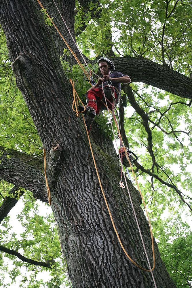 Pflege alter Bäume