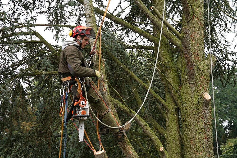 Baumpfleger bei der Arbeit
