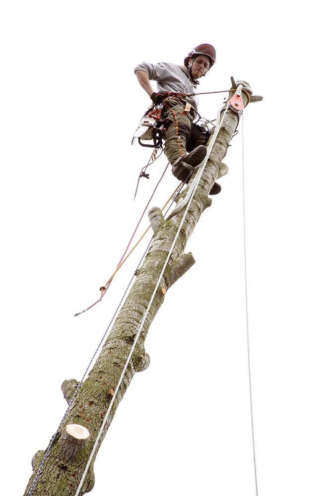 Baumpfleger in luftiger Höhe